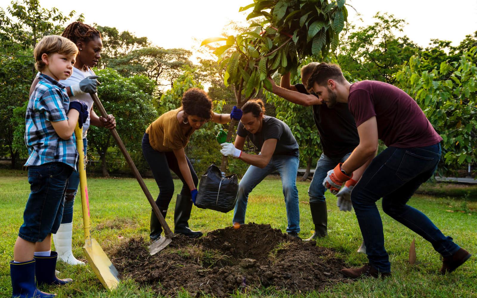 Bomen planten voor een groene aarde: zo doe je dat afbeelding