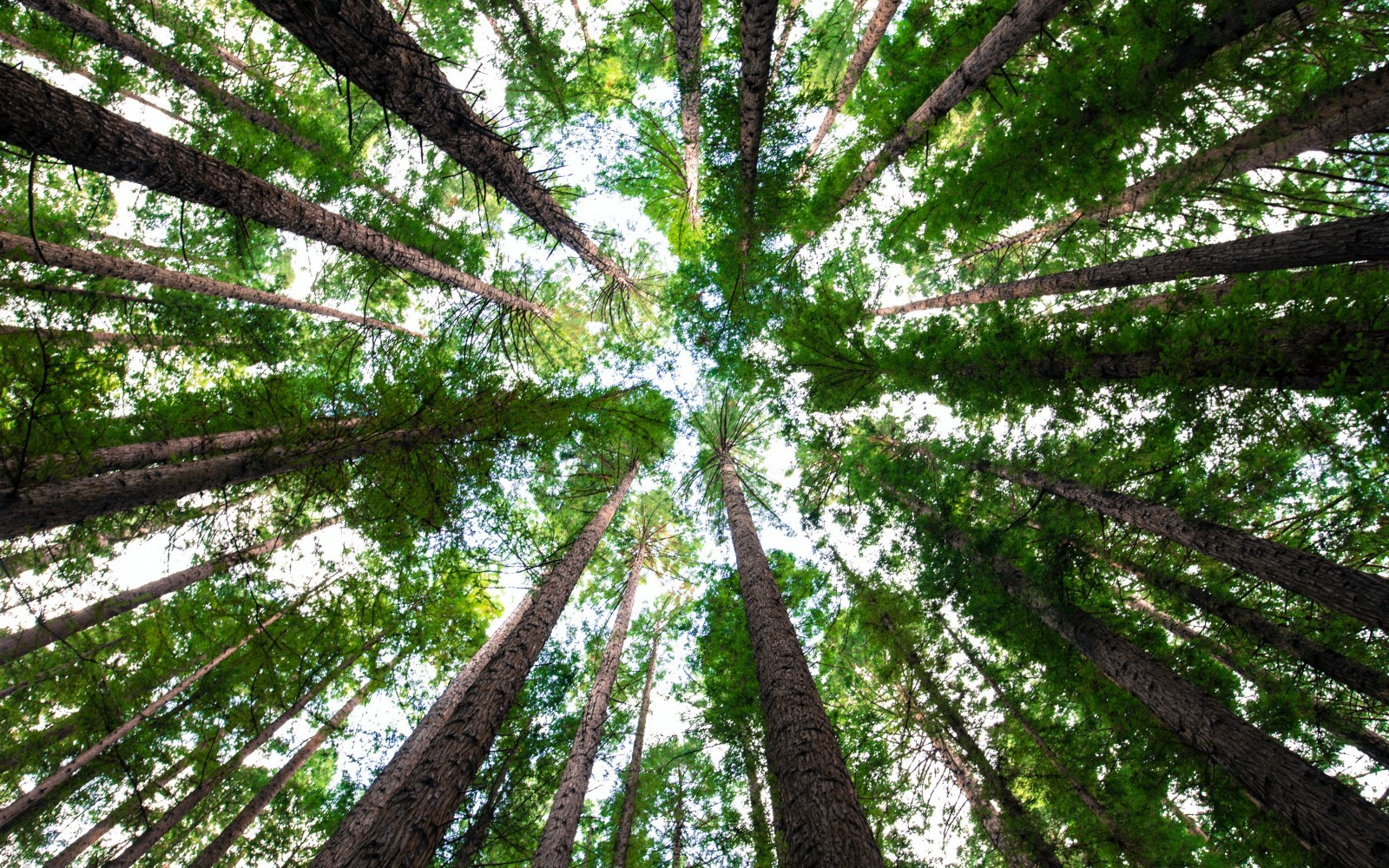 Inspirerende spreekwoorden en spreuken over bomen afbeelding